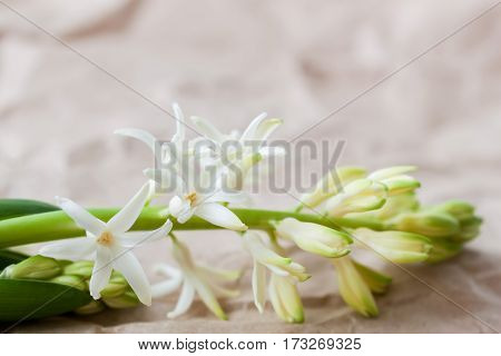 Spring frame with flowers of Hyacinth close up. Delicate floral background. For modern pattern, wallpaper or banner design. Place for your text