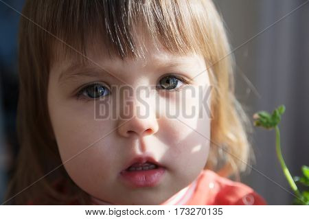 Child portrait closeup with open mouth talking little girl with grey eyes