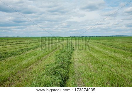 Beautiful Rural countryside landscape. Field green freshly cut grass. Horizontal Wallpaper With Copy Space