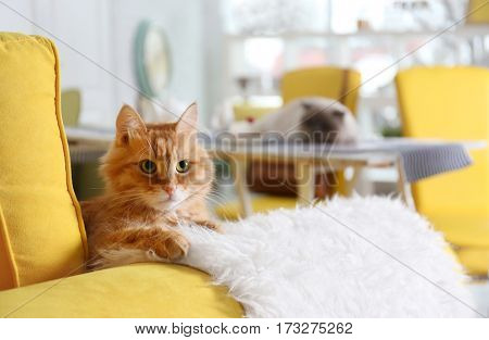 Cute red cat on sofa in modern cafe