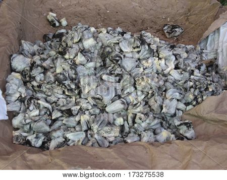 Corn smut, known as huitlacoche in Mexico, is an edible fungus that grows on corn and is considered a delicacy.