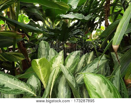 Close look at some tropical green house plants.