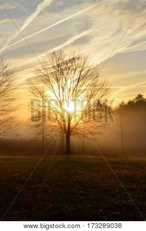 Peaceful morning sunrise shining through trees and fog