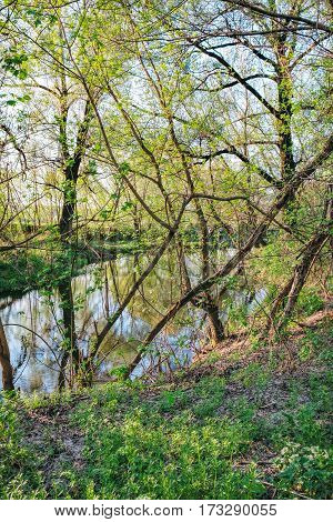 Spring shady forest with all color tones of green and small river, Irpen, Ukraine. The first spring green leaves on an old tree
