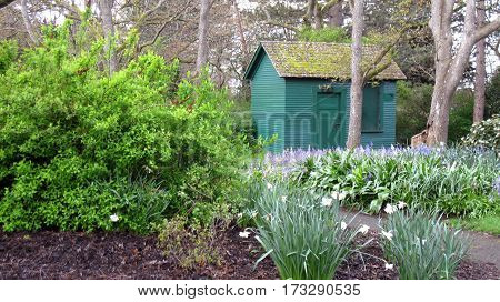 Little Shed in City Garden with lots of Plants and Flowers