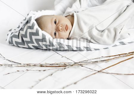 small kid on the white background. child in white and grey envelope. near the baby are willow branches.