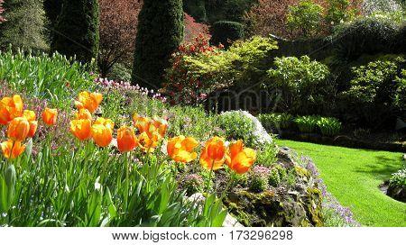 Path Winding Through Glorious Spring Garden Featuring Tulips
