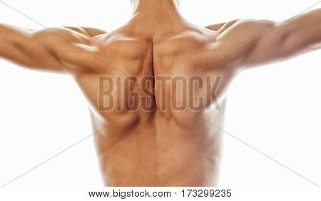 mens back close up isolated on white background, many muscle demonstration, healthy real body concept close up