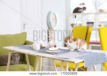 Cute cat on table served in modern cafe