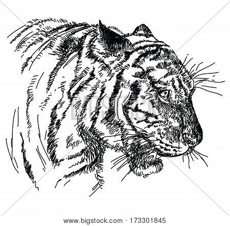 Tiger head vector hand drawing illustration in black and white