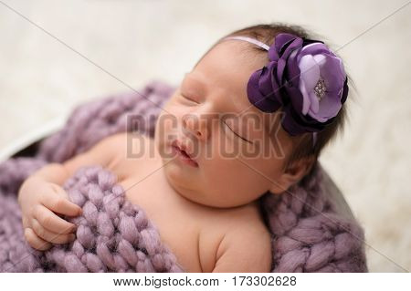 Nine day old newborn baby girl sleeping in a wooden bucket. She is wearing a lavender and purple flower headband.