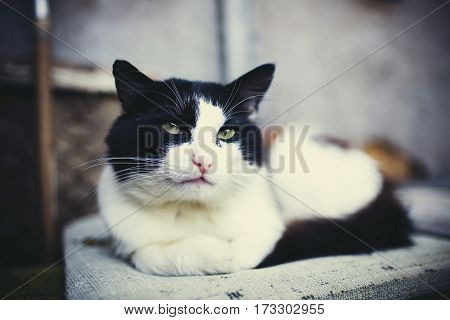 Portrait of black and white rural cat with green eyes.