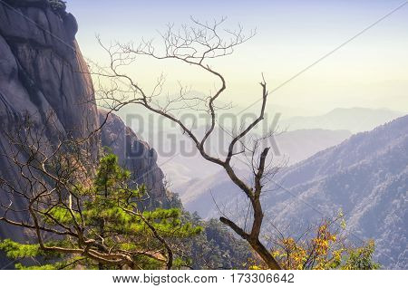 A leave-less tree against the mountains of Huangshan located in Anhui province China.