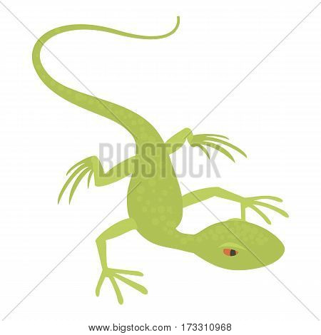 Little lizard icon. Cartoon illustration of little lizard vector icon for web