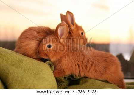 Cute funny rabbits on green blanket against window