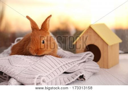 Cute funny rabbit on knitted plaid