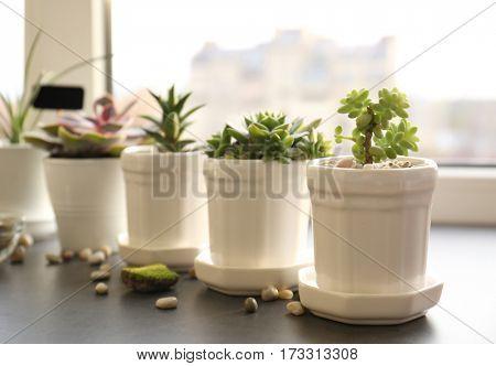 Beautiful composition of houseplants on windowsill