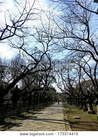 Visitors Take Vacations In Ueno Park Before Flowering Blossom.