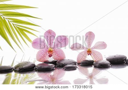 spa concept with zen stones and orchid and palm leaf