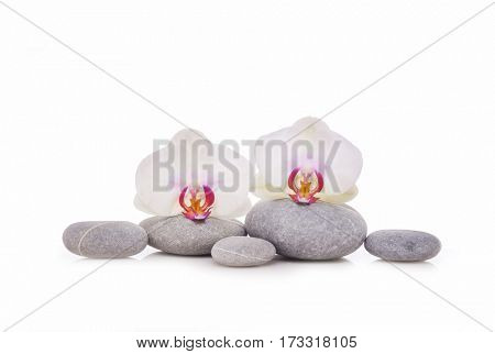 Set of stones and two white orchid