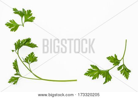 closeup of garden parsley leaves on white background