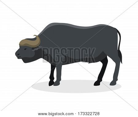 Bull farm animal safari male standing vector illustration. Cattle mammal nature beef agriculture. Domestic rural bovine horned cartoon buffalo.