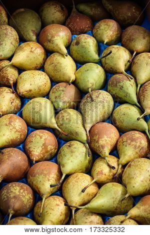 Display of several dozen home-grown pears at an English farmers' market, close-up, arranged in single layer.