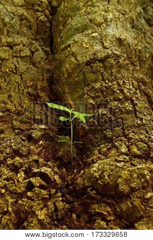 New green leaves born on old tree brown textured background nature stock photo