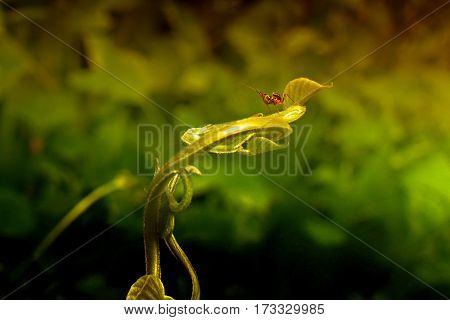 Red ant on a green leaf texture of nature stock photograph with natural background