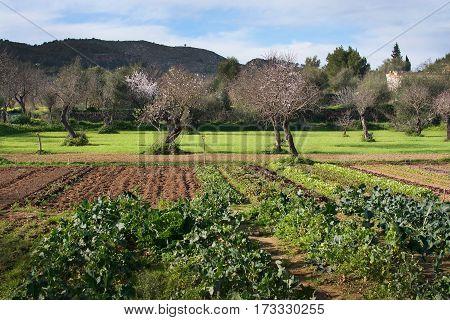 Mallorca Winter Garden