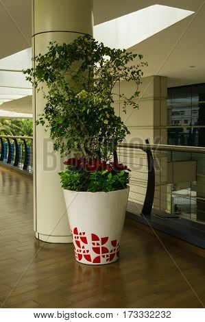 A plant with green leaves in a big white pot with red spotted at Central Park Mall photo taken in Jakarta Indonesia java