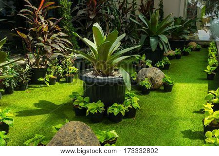 Plant in a stone pot in the middle of green landscape with grass and bushes photo taken in Jakarta Indonesia java