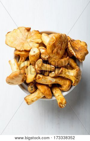 Heap of fresh yellow forestry chanterelle