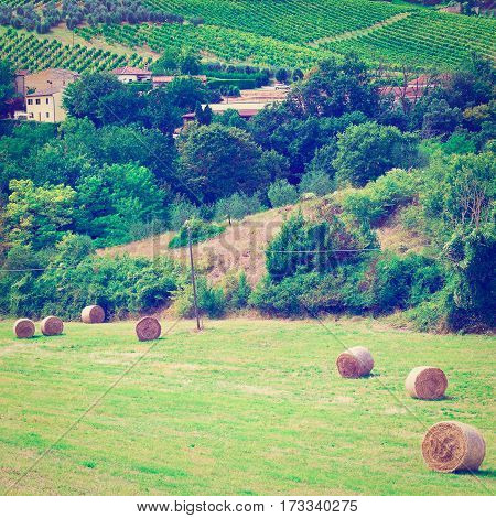 Landscape with Many Hay Bales and Vineyard Instagram Effect