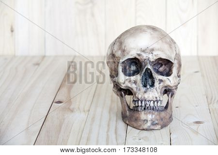 Human Skull On Wood Background