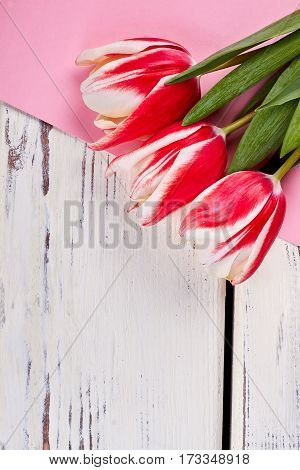 Fresh tulips on wooden surface. Flowers for no reason.