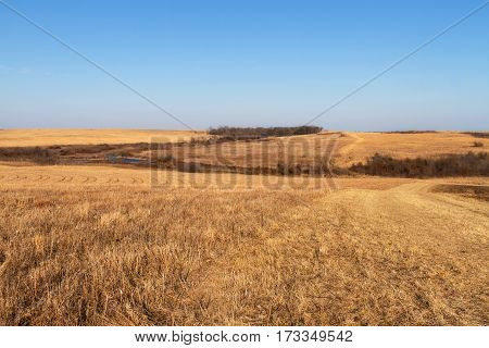 Golden grassland of the Taberville Prairie in Missouri
