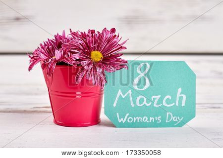 Chrysanthemums in decorative bucket. Ready to celebrate women's day.