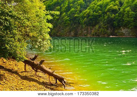 Dry Fallen Tree on the Bank of the River in the Italian Alps