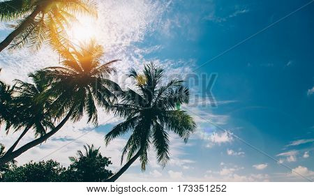 Palm Tree At Blue Sky With Clouds At Daytime