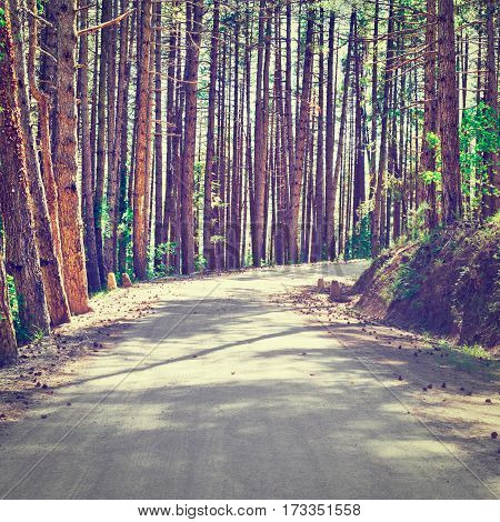Asphalt Forest Road in Italy Instagram Effect