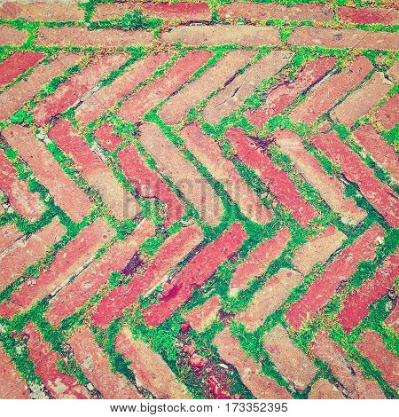 Bricks Laid as Herringbone Pattern with Streaks of Green Grass Between them Instagram Effect