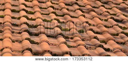 roofing covered with moss South Bohemia Czech Republic