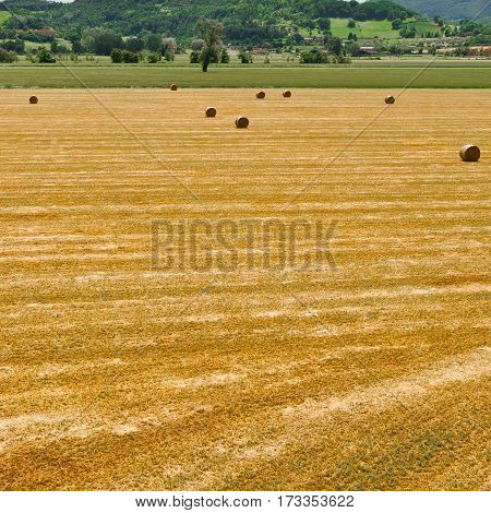 Landscape with Many Hay Bales in Italy