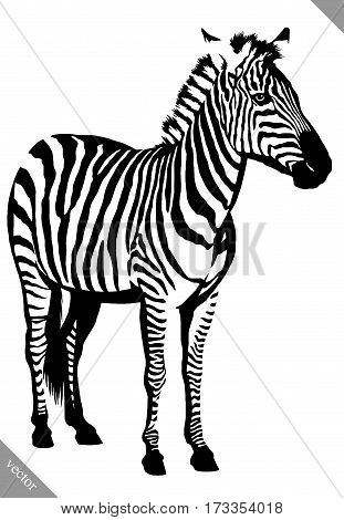 black and white linear draw zebra vector illustration
