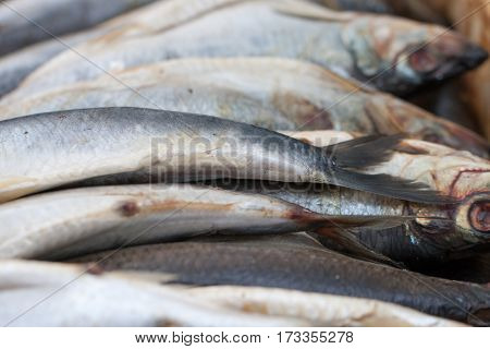 raw herring on the market close up. Selective focus.
