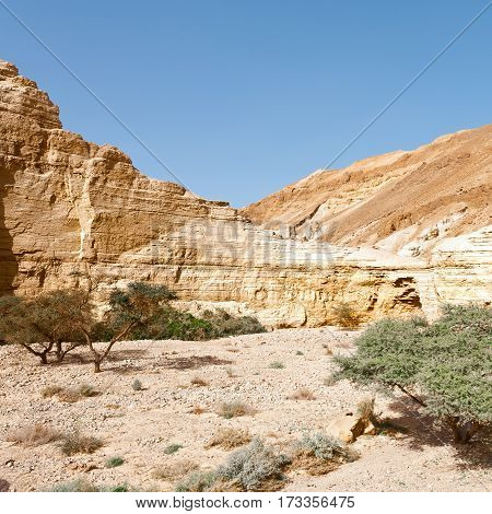 Canyon in the Judean Desert in Spring
