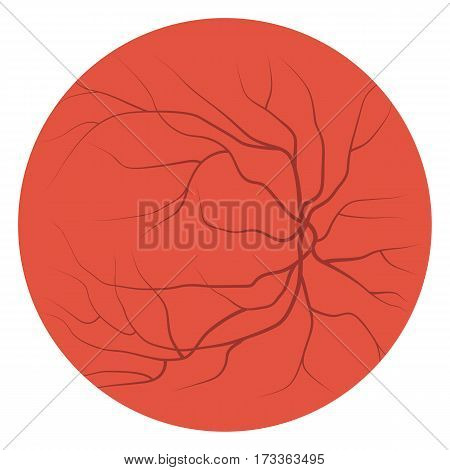 Eye red veins, blood vessels and arteries. Vector illustration
