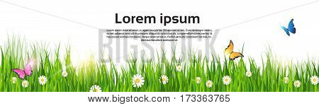 Spring Landscape Green Grass Flower Butterfly Land Banner Flat Vector Illustration