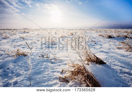 Agricultural field covered by snow in the morning at sunrise on the horizon